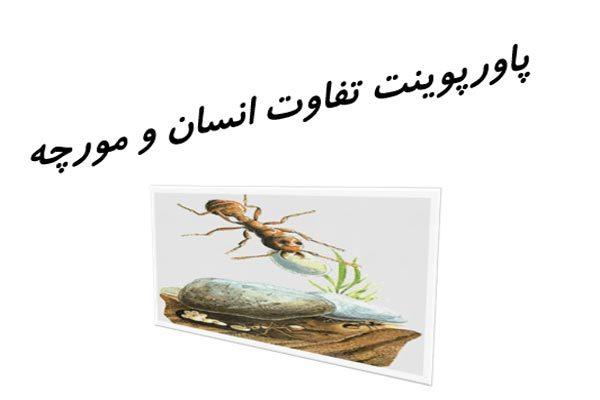 پاورپوینت تفاوت انسان و مورچه به صورت رایگان - فروشگاه ایرانیان شهرساز